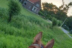 De hoeve vanaf een paardenrug