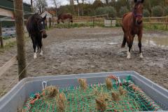 Paarden in paddock met slowfeeder